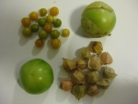Tomatillos and husk cherries