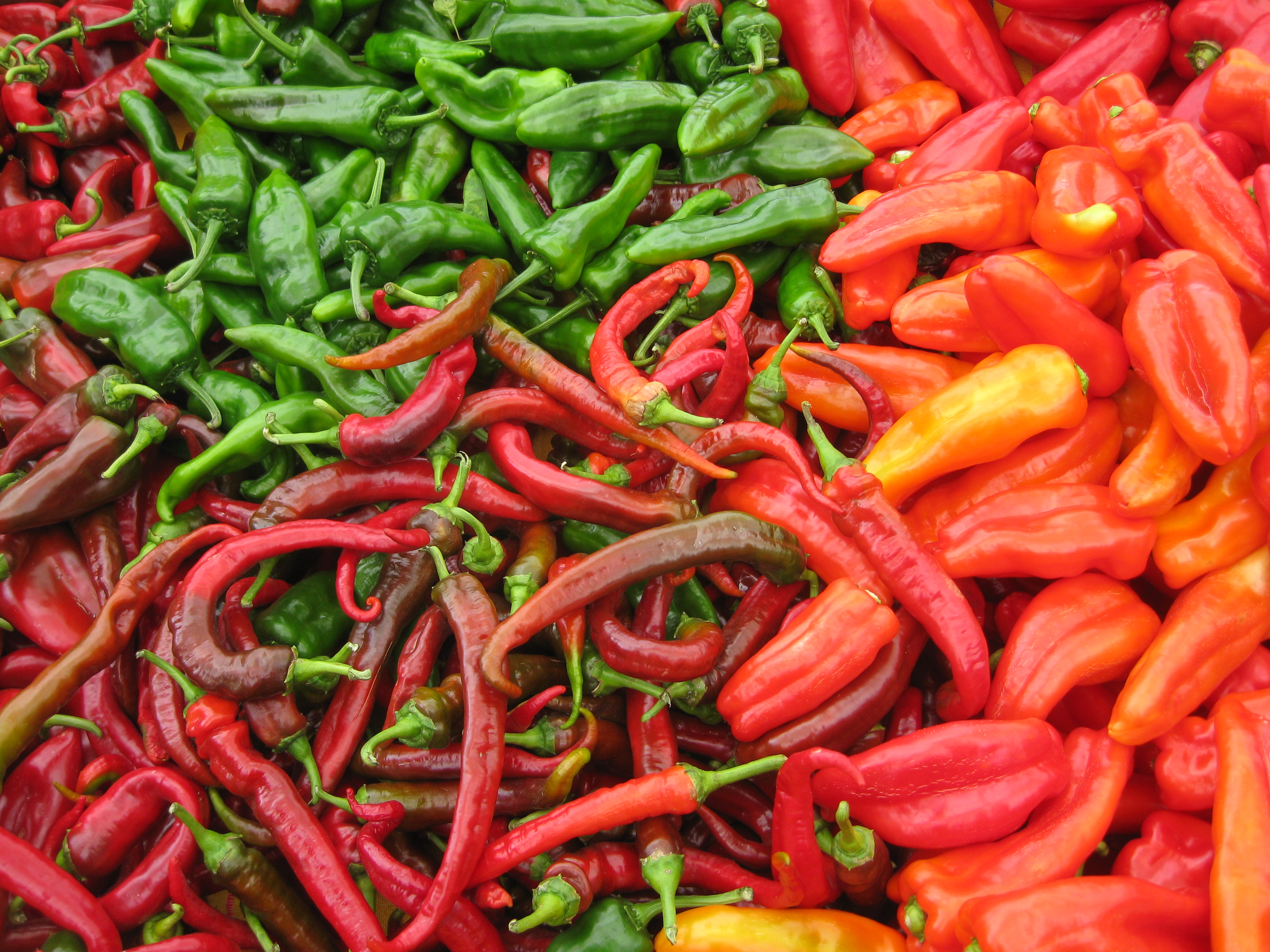 Hot pepper casino download parkinsons disease medication and gambling
