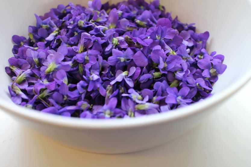 2013 0504 IMG_1351 Violets in bowl