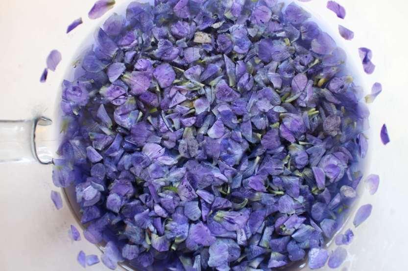 2013 0504 IMG_1416 Soaking violets