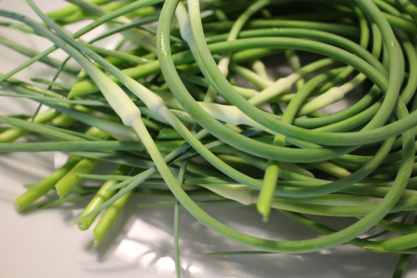 2014 0626 IMG_4617 Garlic scapes