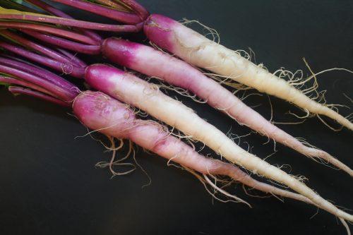2015 0511 IMG_5860 Hinona Kabu Turnips