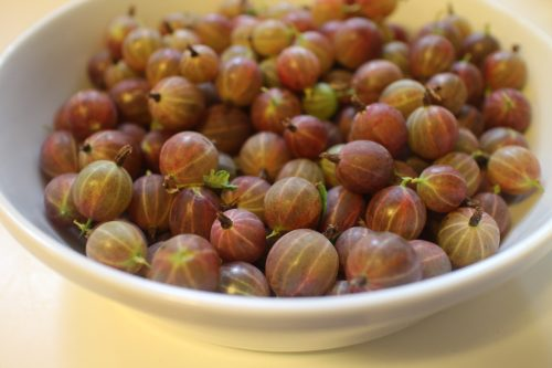 2015 0627 Gooseberries in bowl