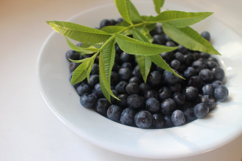 2015 0725 Blueberries and lemon verbena