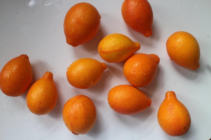 20200314 Kumquats IMG_7981